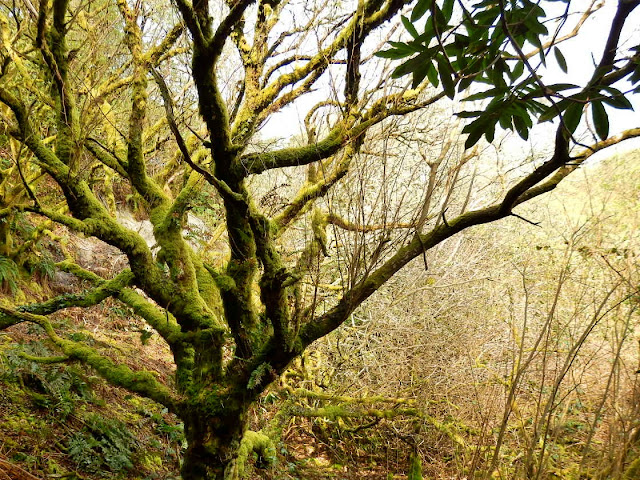 Trees in Gover Valley, St.Austell, Cornwall
