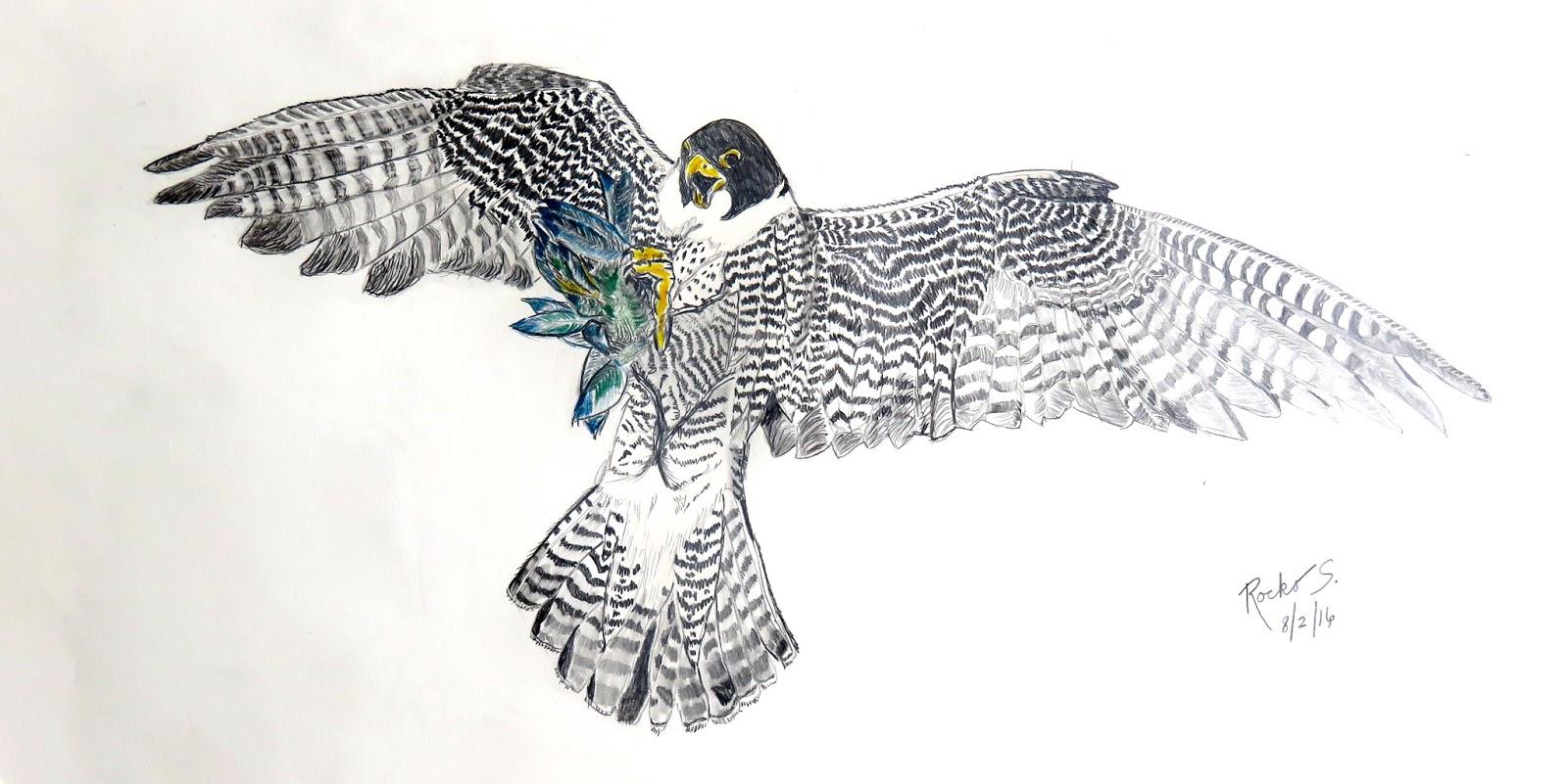 flying falcon drawing - HD1600×801