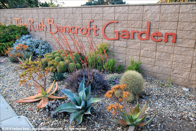 Succulents and More: Redesigned Ruth Bancroft Garden nursery needs