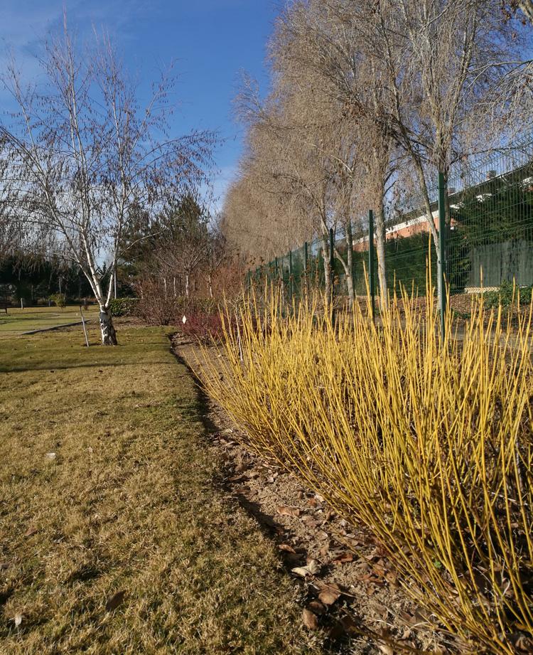 Jardín Botánico Arroyo: Invierno en el Jardín Botánico de Arroyo