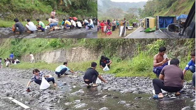 Warga Ponorogo Berebut Ikan Lele yang Tumpah Ke Jalanan Saat Terjadi Truk Kecelakaan
