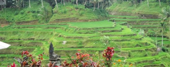 Mengunjungi Terasering Sawah Subak Desa Tegallalang - Desa Ceking Tegallalang Gianyar Bali, Liburan, Perjalanan, Objek Wisata