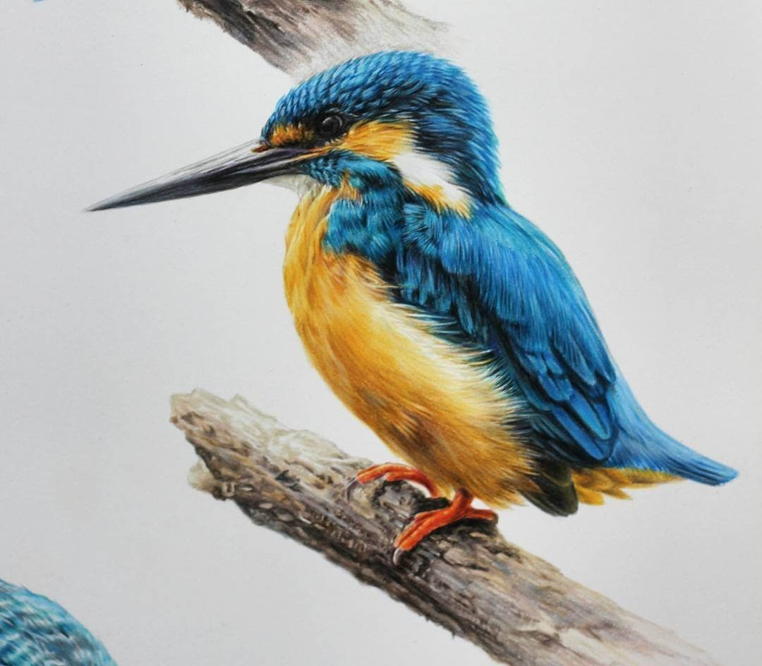 04-Kingfisher-Jae-Kyung-Domestic-and-Wild-Animals-Pencil-Drawings-www-designstack-co
