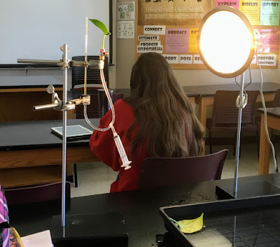ap biology transpiration lab essay This lab strongly relates to the major theme of ap biology of evolution when plants shifted from living in an aquatic environment to living on a terrestrial environment it was a large evolutionary shift.