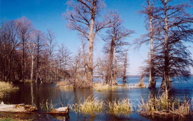 Danau Reelfoot