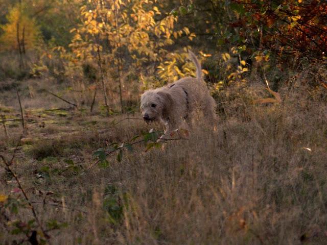 Mina Leishmaniose Babesiose Haard Hunderunde Heide Ruhrgebiet Sonnenuntergang Herbst