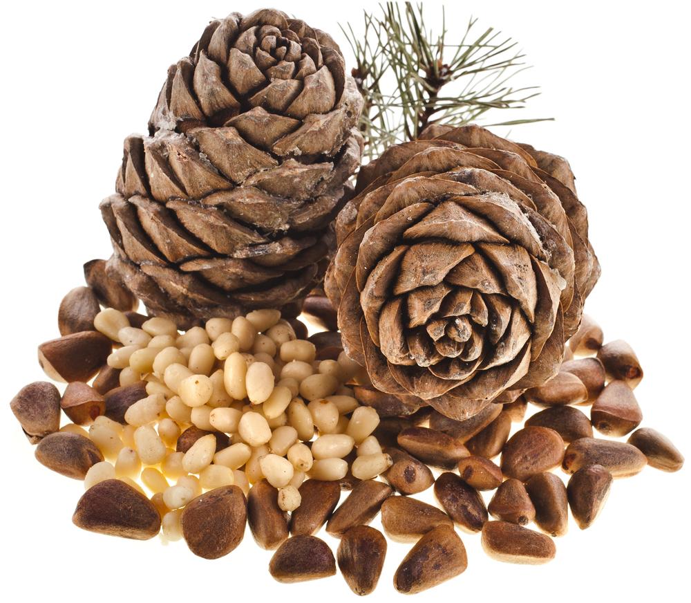 Is pine nut a nut