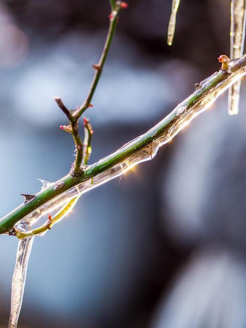 Winter, ijs