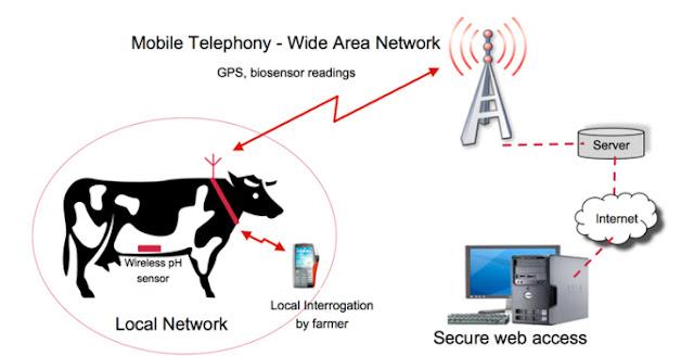 cara kerja deteksi sapi birahi secara online melalui smartphone