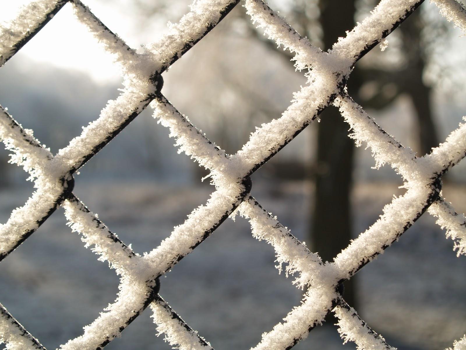 sneeuw winter januari moestuin volkstuin