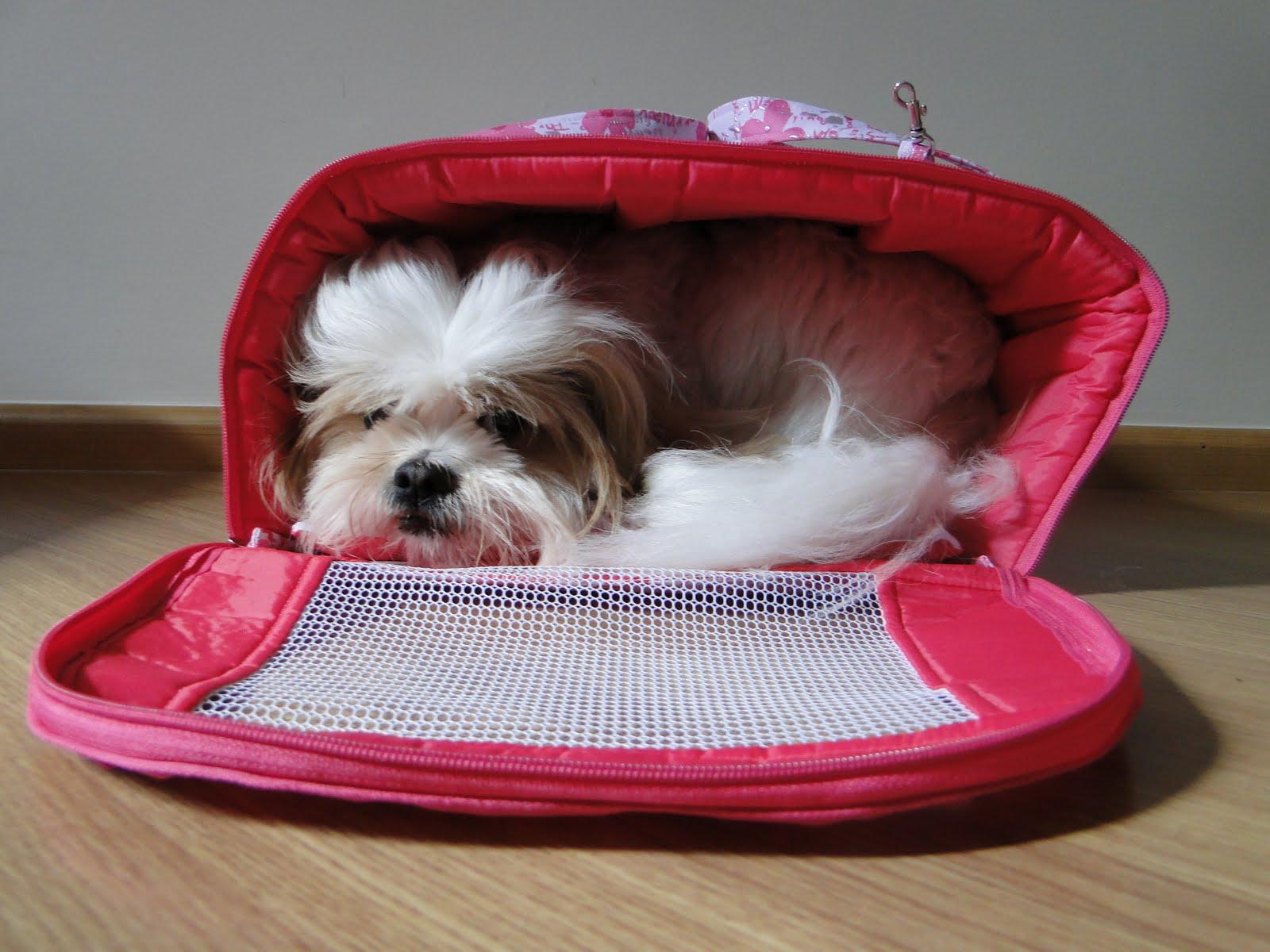 Fonte  http   amigosdepelo.blogspot.com 2011 03 bolsa-de-transporte -para-caes-e-gatos.html d315ec0caeb