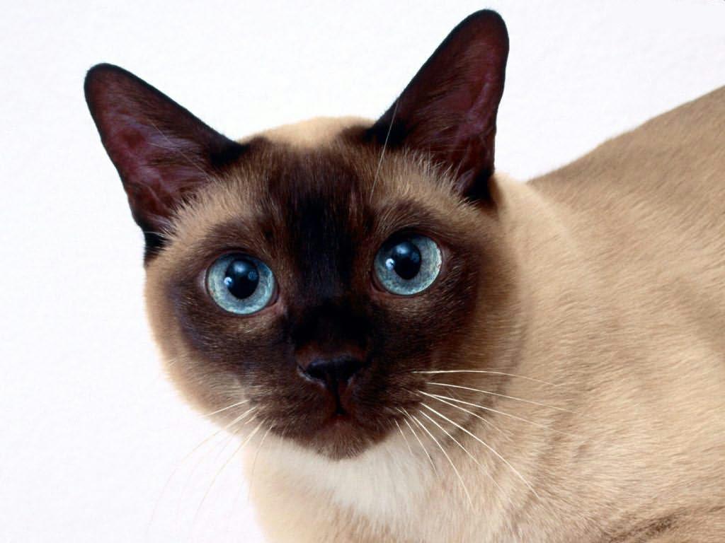 gato - photo #41