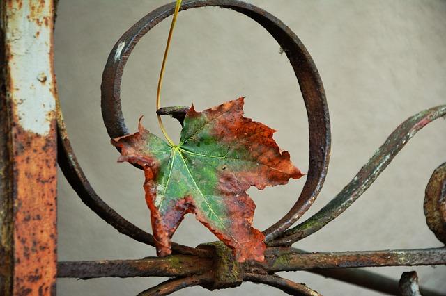 ảnh chiếc lá mùa thu rơi trên cửa