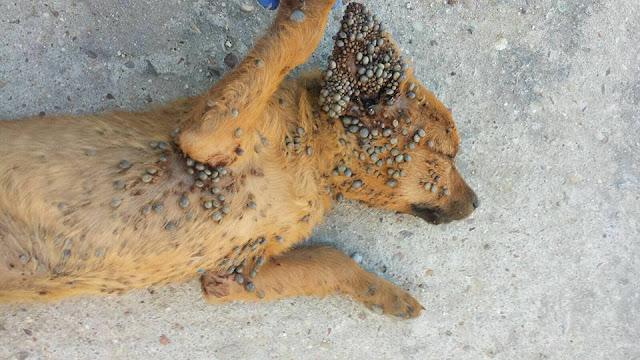 Estremecedor: Lo que puede sufrir un animal cuando se abandona