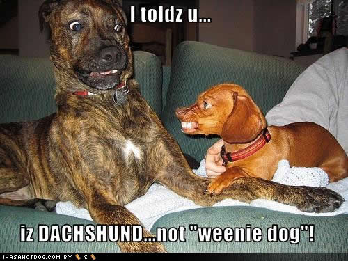 funny dog pictures with captions - photo #26