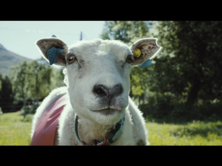 #SheepWithAView – a Wonder Journey around Norway