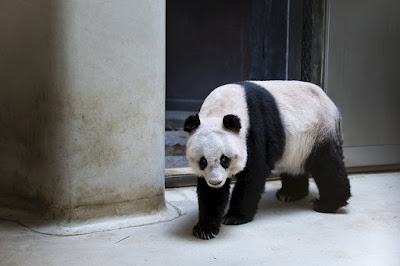 World's oldest giant panda in captivity passes away in Hong Kong