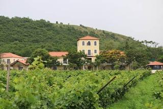 Wine Tourism: