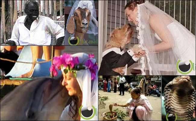 8 Orang Aneh ini pernah Kawin dengan Binatang