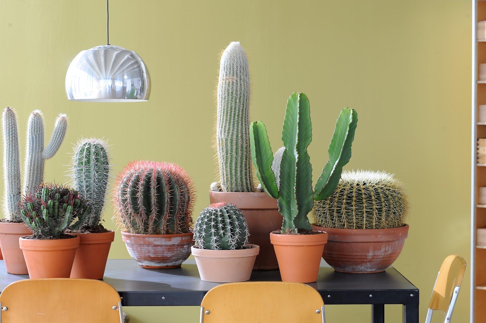 blogg fontanillas cactus planta del mes de junio. Black Bedroom Furniture Sets. Home Design Ideas