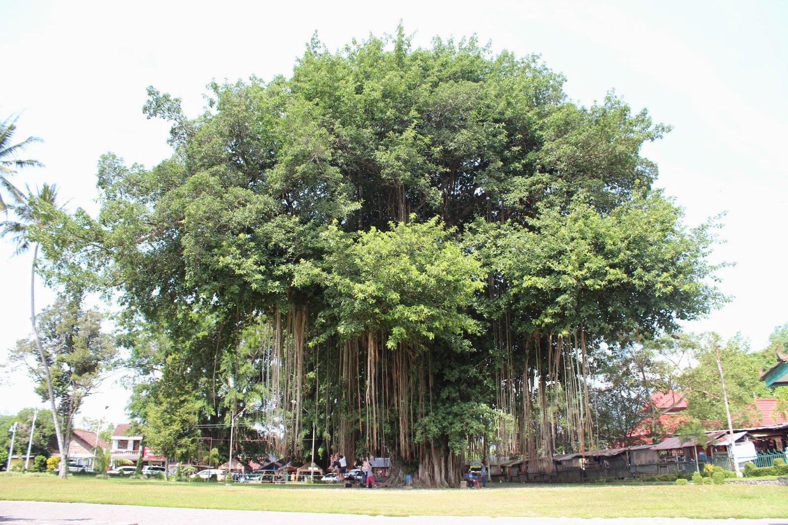 Awesome Yogyakarta