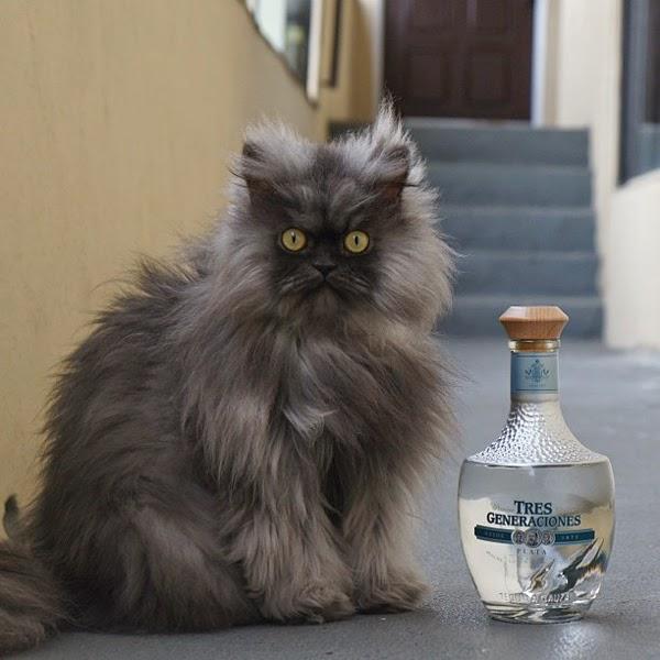7 Kucing Ini Menjadi Viral Di Laman Sosial Seluruh Dunia