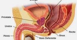 7 diete sanatoase pentru prostata - prostatita.adonisfarm.ro