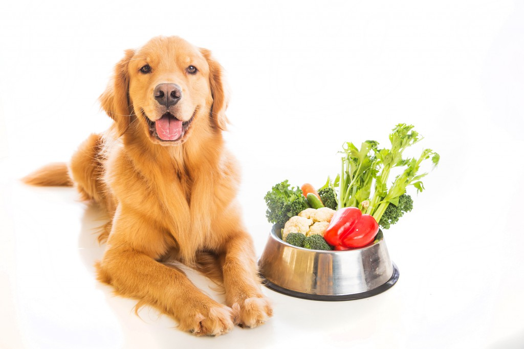 Right Food for Your Dog's Diet