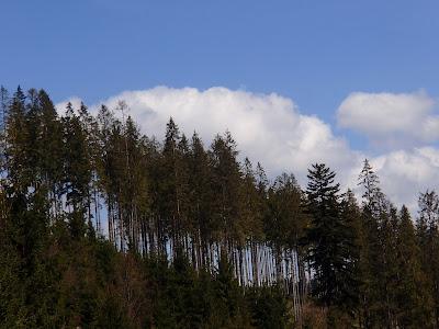 Grzyby wiosenne, grzyby w maju, grzybobranie wiosenne, grzybobranie w maju, grzyby na Słowacji, słowackie dolinki, smardze, smardzowanie 2016, smardzowanie na Orawie, smardzowanie na Słowacji