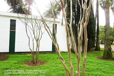Blog jardinería y paisajismo