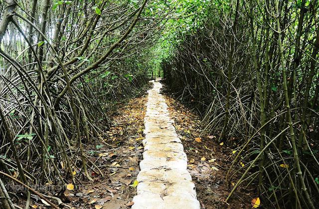 Ini yang disebut Goa Mangrove di pantai Congot