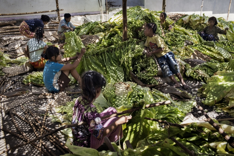 Crianças a trabalhar nas plantações da Indonésia