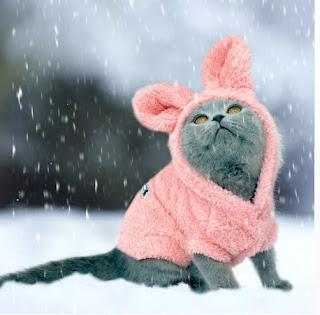 одежда для кошки