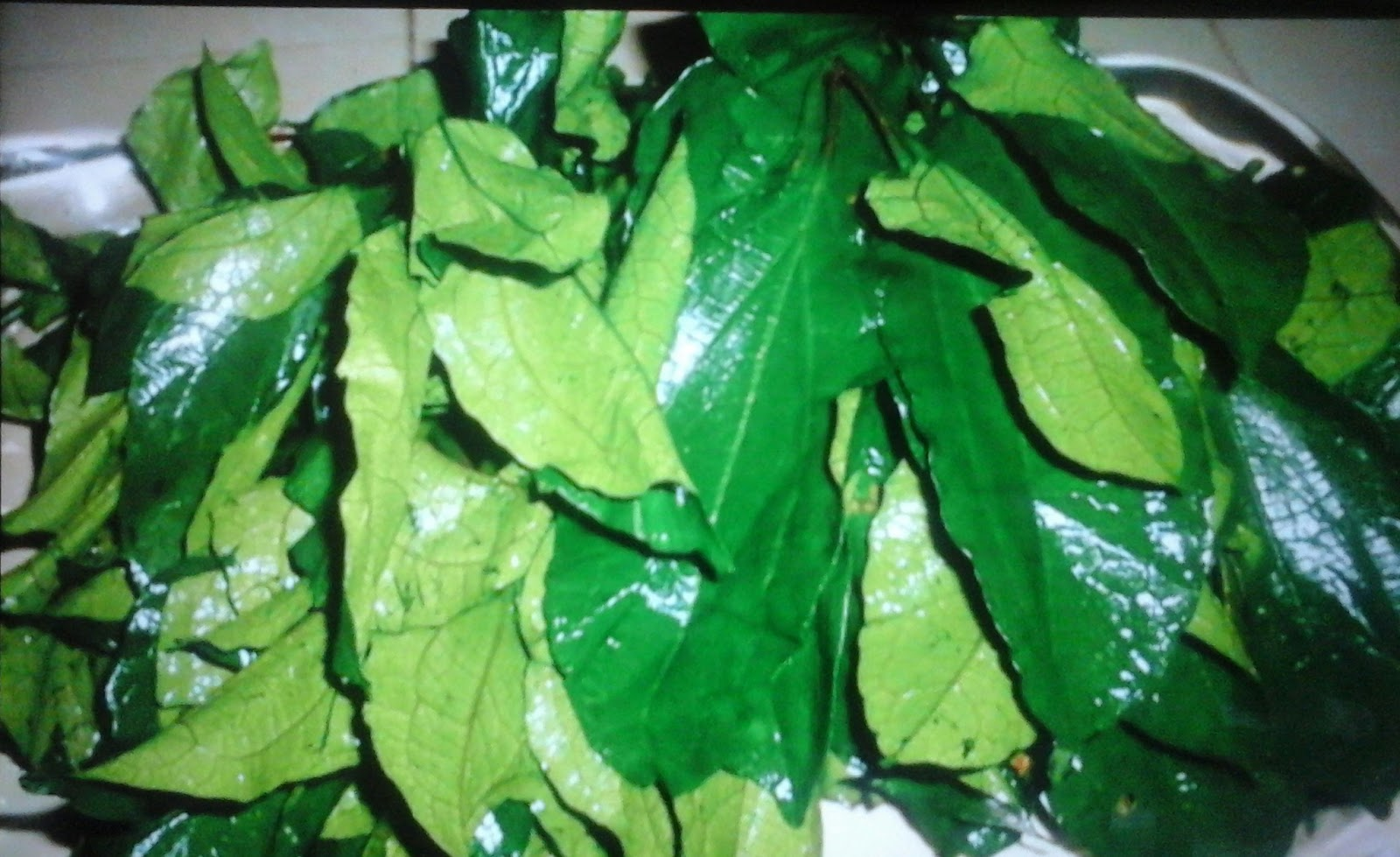How To Start Ugu Farming (Fluted Pumpkin) Business In Nigeria And Make The Best Income In One Month