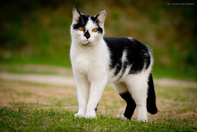 Koty, które żyją najdłużej.