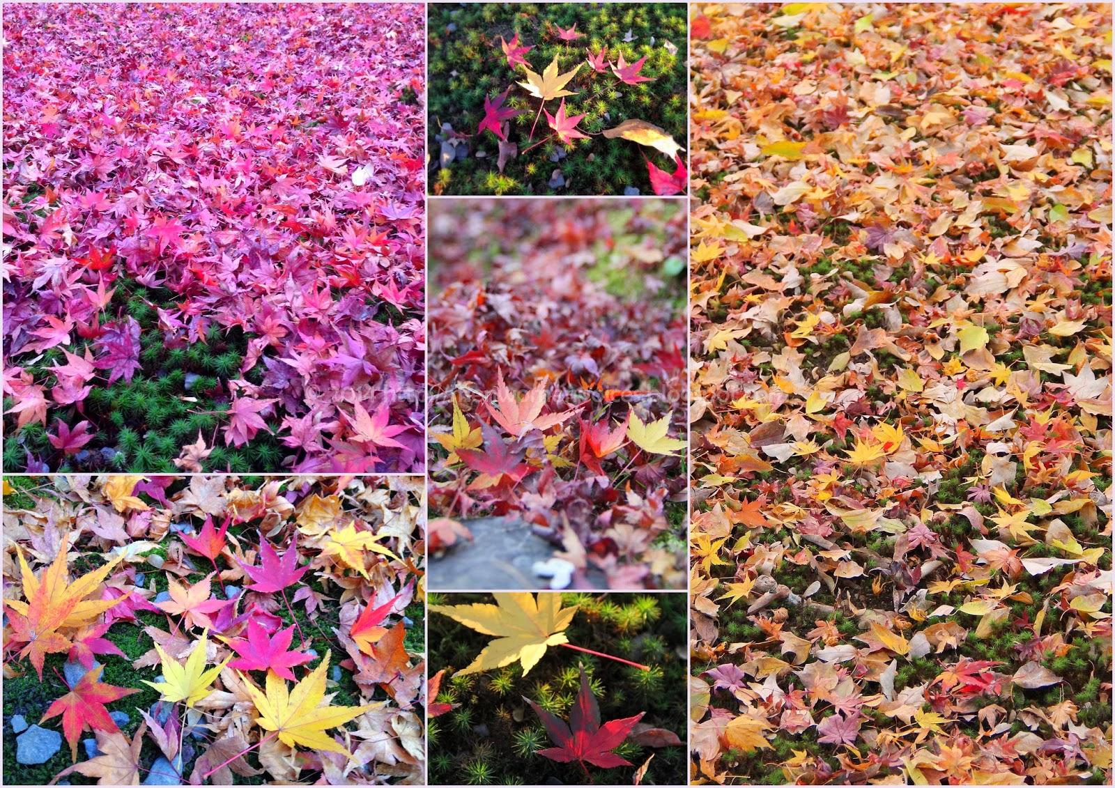 http://menwomenvoices.blogspot.com/2014/01/tofukuji-temple-kyoto-japan.html