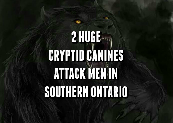2 Huge Cryptid Canines Attack Men in Southern Ontario
