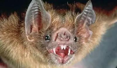 Βαμπίρ νυχτερίδες έχουν αρχίσει να επιτίθενται στους ανθρώπους