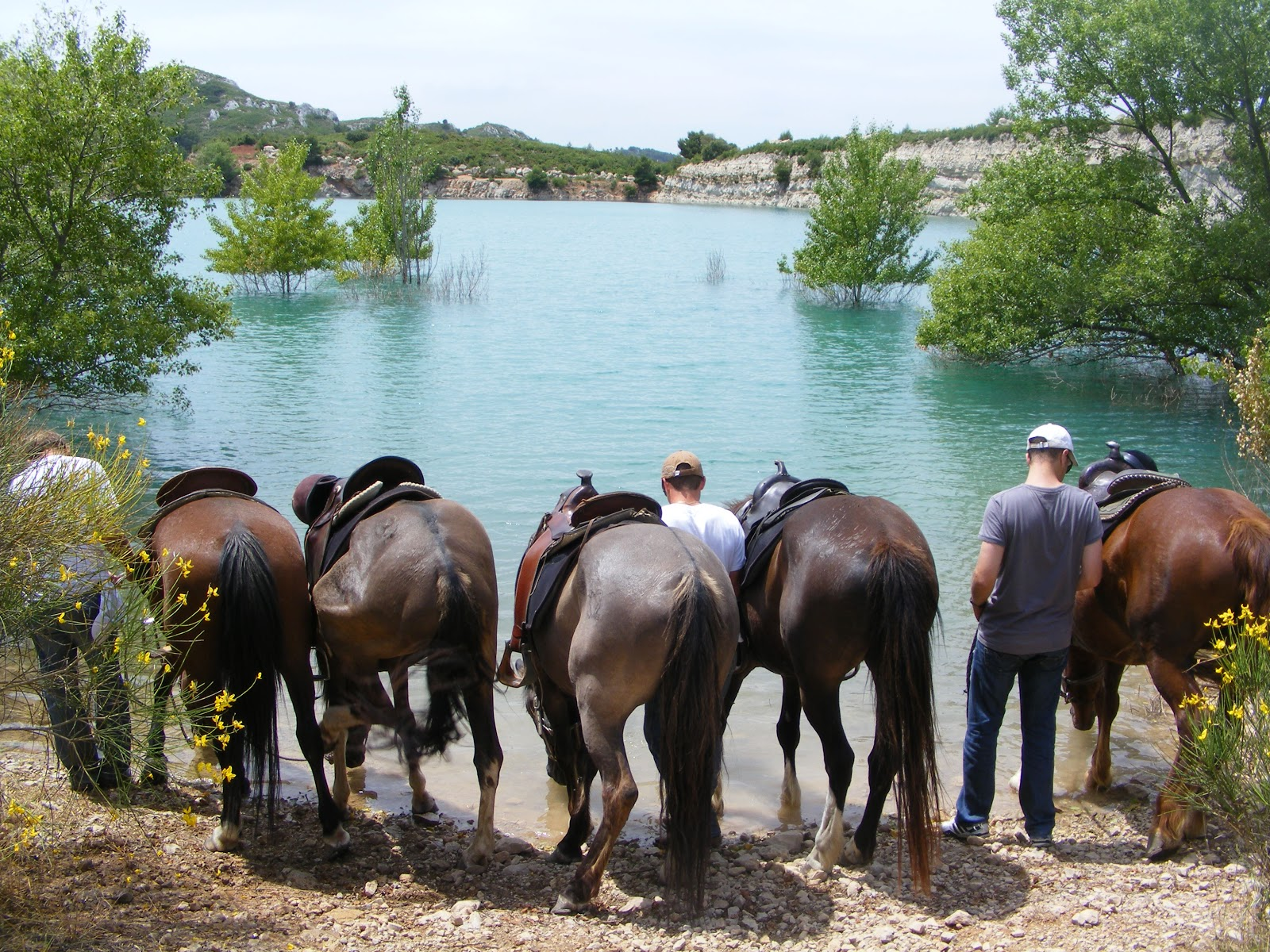 895db6263cdd At horse s pace you will discover the richness of Alpilles Natural Park and  travel around the authentic Provence.
