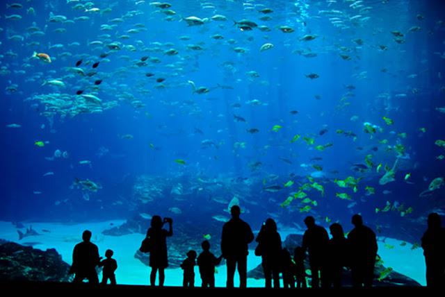 Aquários no Miami Seaquarium