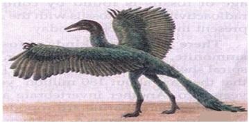 आर्कियोप्टेरिक्स :पक्षियों व सरीसृपों के बीच की कड़ी