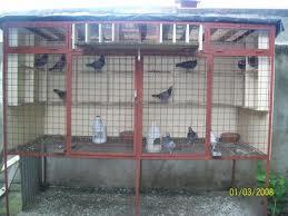 কবুতরের ঘর