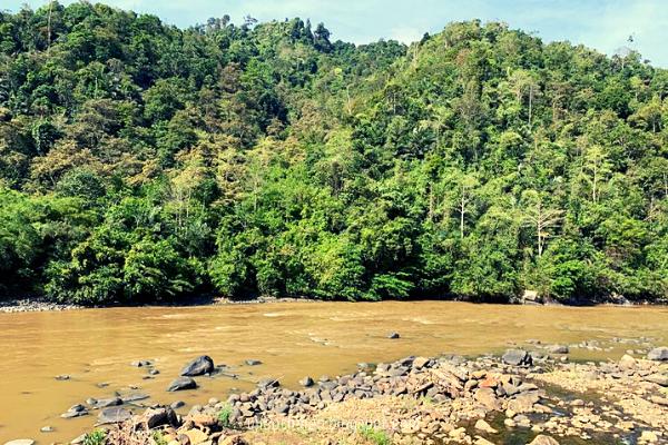 pemandangan sungai padas