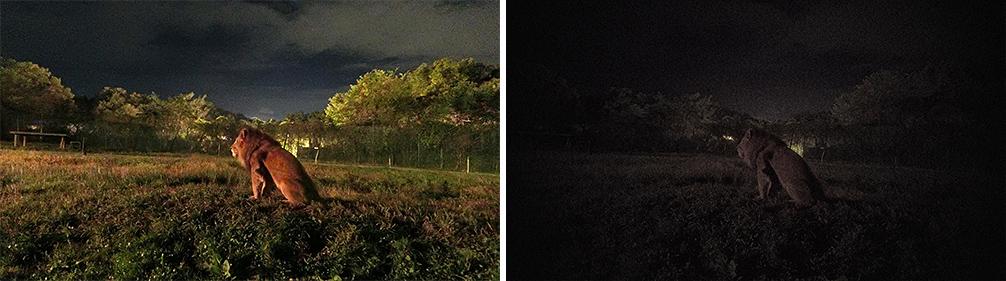 Сравнение Casio EX-FR110H и другой «обычной» камеры Casio