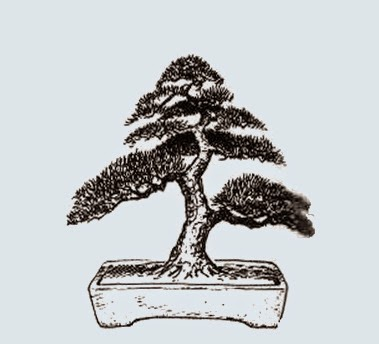 http://evoluzionebonsai.blogspot.it/2015/02/stili-bonsai-moyogi-eretto-informale.html