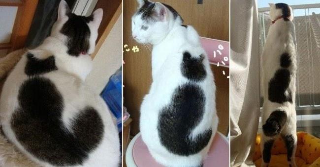 10 Gambar Kucing Si Comel Yang Mempunyai Corak Bulu Unik Selongkar10