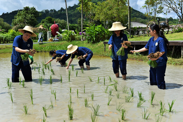 planting rice is never fun