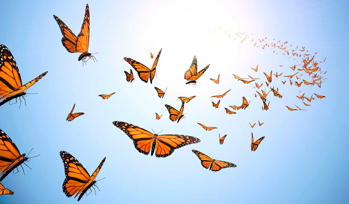 butterfly wallpapers flying - photo #5