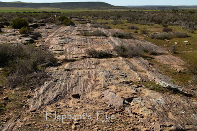Glacial pavement at Oorlogskloof