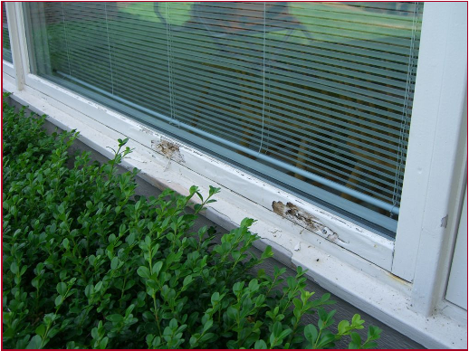 Pozzi Wood Window Rot Repair